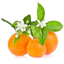 オレンジフラワーエキス